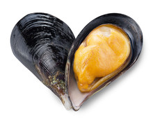Mussel In A Shape Of Heart.