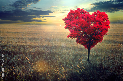 Red heart-shaped tree in th...