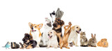 Fototapeta Animals - set pet looks