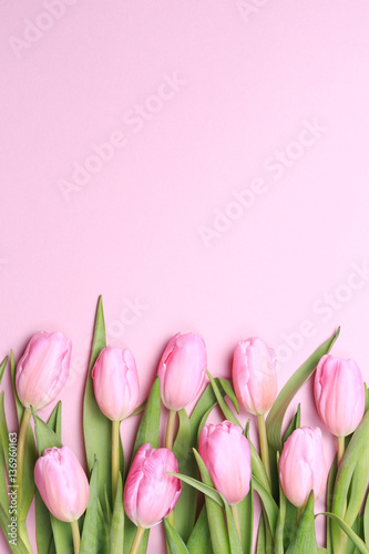 Foto op Plexiglas Tulp Pink tulips on the pink background. Flat lay, top view. Valenti