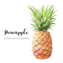 Watercolor Pineapple. Hand Painted Modern Decorative Fruit Object Isolated On White Background. Summer Food Decor Illustration
