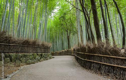 Green bamboo grove at Arashiyama in Kyoto, Japan