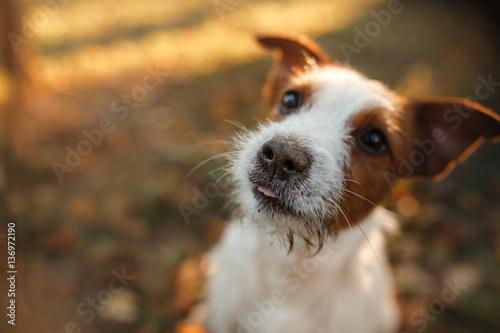 Photo cute dog portrait in autumn outsude