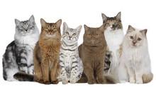 Katzengruppe Mit Mehreren Katzen Nebeneinander Sitzend