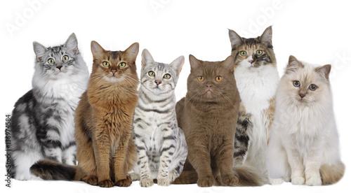 Photo  Katzengruppe mit mehreren Katzen nebeneinander sitzend