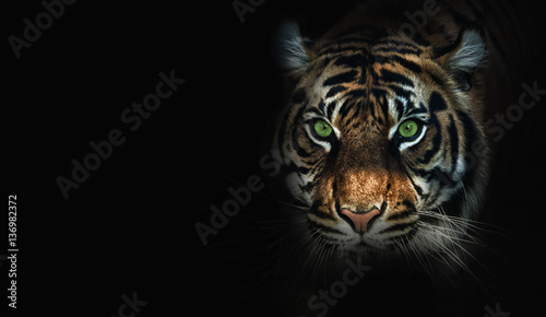 close up on tiger, black background