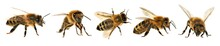 Group Of Bee Or Honeybee, Apis...