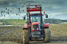 Tractor Ploughing A Field With Feeding Gulls