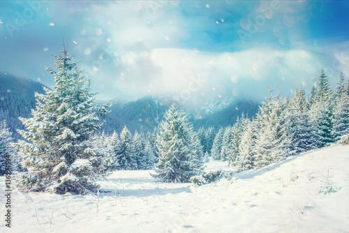 Foto  Winter landscape glowing by sunlight. Dramatic wintry scene.