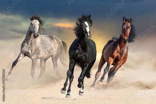 Trzy konie galopujące w pustynnym pyle