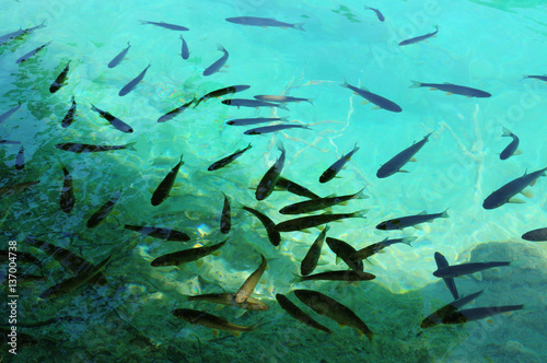 Spoed Foto op Canvas Groene koraal Pure clear water with trout fish