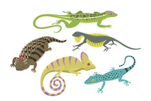 Different Kind Of Lizard Repti...