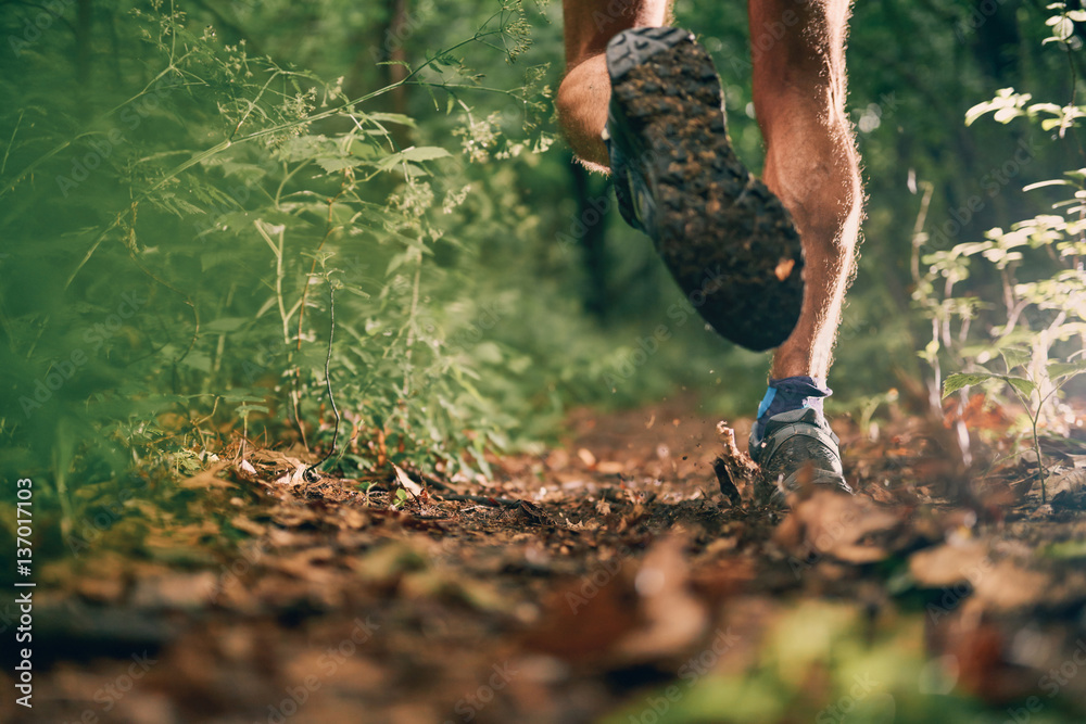 Fototapety, obrazy: Muscular calves of a fit male jogger training for cross country forest trail race in nature park.