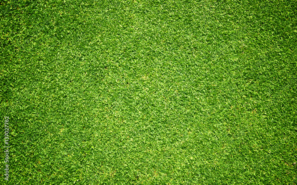 Fototapety, obrazy: grass background Golf Courses green