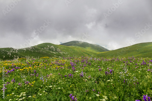 Poster Heuvel Beauty mountain panorama landscape with field of wild flowers