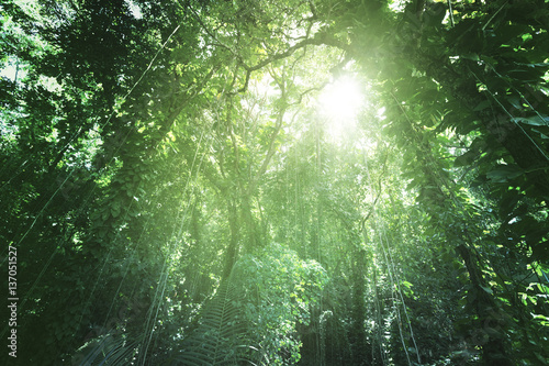 Canvas Prints Olive Jungle of La Digue island, Seychelles