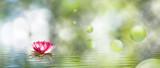 Fototapeta Kwiaty -  image of lotus flower on the water