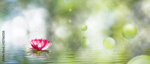 Foto op Aluminium Bloemen image of lotus flower on the water
