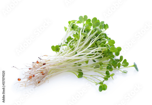alfalfa sprouts or kai wah-rei on white background Wallpaper Mural