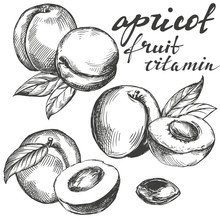 Apricot Fruit Set Hand Drawn V...