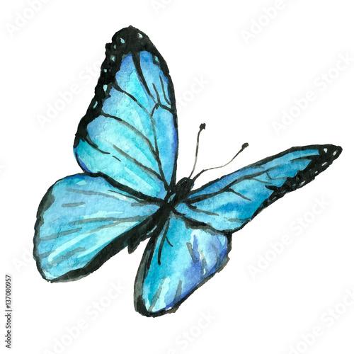 Ilustracja błękitny motyl malował ręką z akwarelą