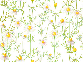 Fototapeta Do Spa Seamless floral pattern with chamomile flowers. Summer backgroun