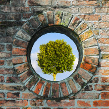 Old Round Window On Brick Wall With Tree On Background - Concept Image