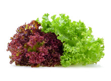 Red And Green Oak Lettuce
