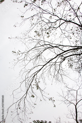 branch of treetop and sky ,white background of treetop Fototapet