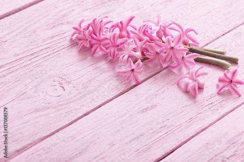 Foto op Canvas Bloemen fresh flowers hyacinths on wooden background