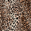 canvas print picture - Natural Leo print - animal seamless background