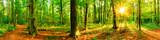Fototapeta Las - Wald Panorama mit Waldweg bei Sonnenschein im Frühling