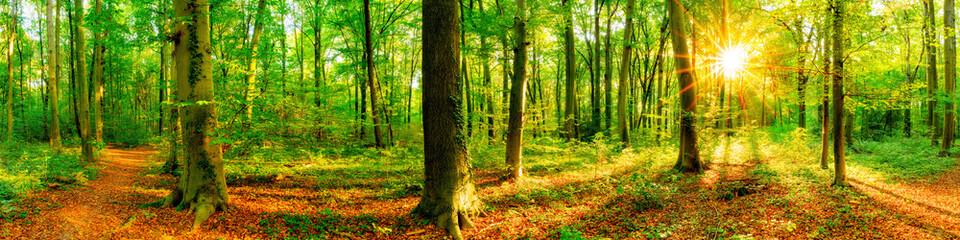 Wald Panorama mit Waldweg bei Sonnenschein im Frühling