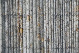 Fototapeta Las - A fence made from tree trunks