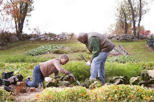 Senior couple working in vegetable garden