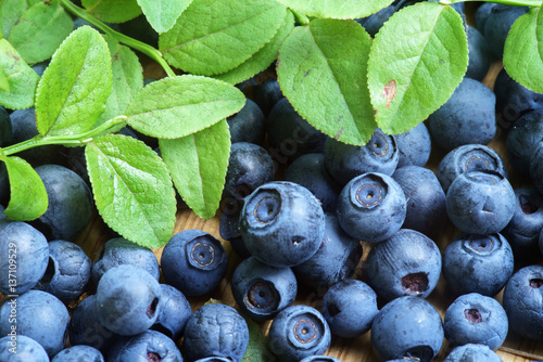 Bilberry Close Up