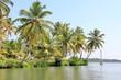 Paysage de cocotiers en Inde