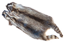 Two Natural Raccoon Pelts