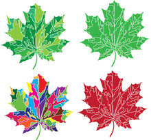 Set Of Four Maple Leaves In Po...