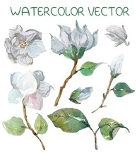Beautiful Watercolor Magnolia ...
