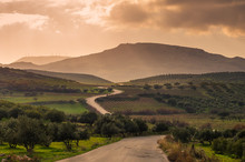 Scenic View Of Cretan Landscape At Sunset.Typical For The Region Olive Groves, Olive Fields, Vineyard And Narrow Roads Up To The Hills.