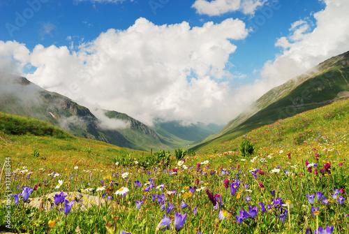 Fototapeta  Alpine meadows in the Caucasus summer