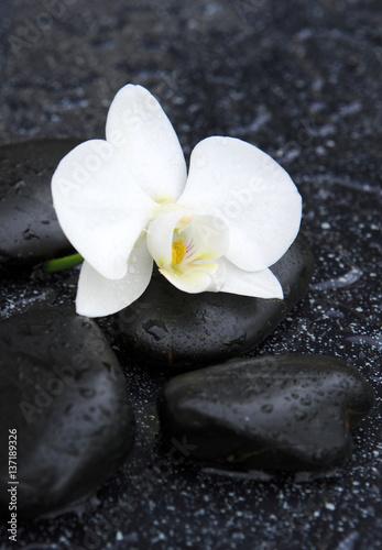 pojedyncza-biala-orchidea-i-czarni-kamienie-zamykamy-up
