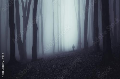 Fotografie, Obraz  Haunted forest background