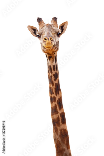 Canvas Prints Giraffe Giraffe Closeup Isolated - Happy Expression