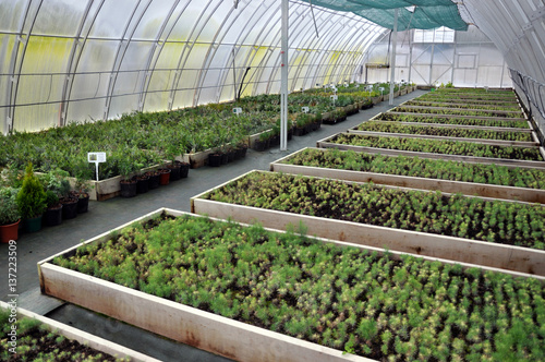 Polycarbonate greenhouses for growing cuttings of shrubs and
