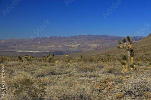 Garden Poster Natural Park Death Valley