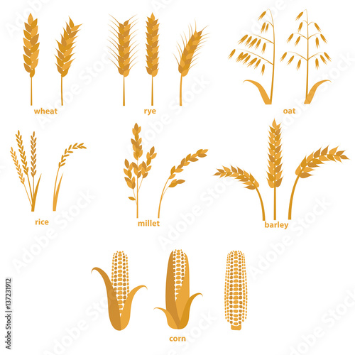 Fotografia  Cartoon Cereals Grain Set. Vector
