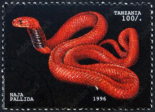 Postage stamp Tanzania 1996 Red spitting cobra, snake