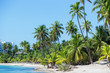 the most beautiful tropical beach. Clear water, blue sky, greem palm trees, white sand.